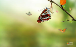 Butterfly Seven Lady Ladybug Insect Slide Background