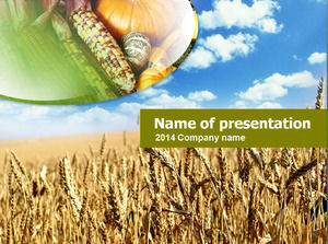 Corn pumpkin wheat waves Thanksgiving theme ppt template