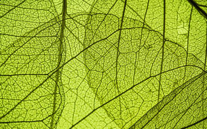 Green Colorful Leaves Veil Photo High Definition Big Picture Background