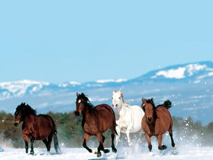 Horse in the snow gallop slide background picture