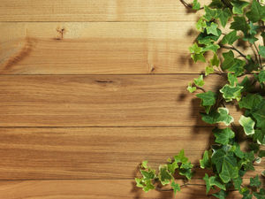 Ivy covered wooden ppt background