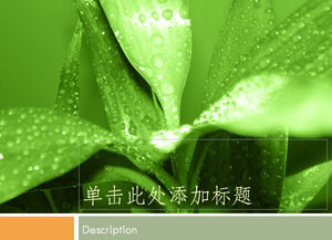 Leaves on the leaves of the dew flowers of fresh green spring green fresh ppt template