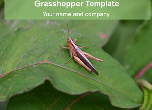 Locust Feature - Insect Ppt Template