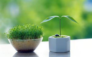 Small bonsai Jingyi green background ppt picture