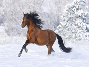 Snow running the horse