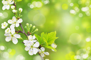 Spring bloom green dream spot ppt background picture