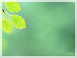 Spring leaves light green background picture